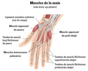 chirurgien de la main