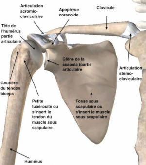 Chirurgien de l'épaule Valencienne
